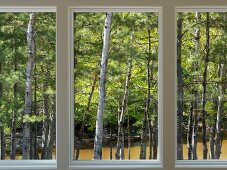 Windows with view of woods