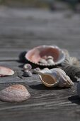 Various shells in sunshine on wooden table