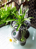 Green potted plants on table