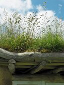 Green roof on porch made of unworked wooden beams and branches