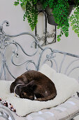 Cat lying on furry cushion on metal chair