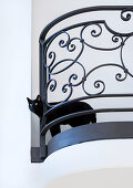 Black cat poking head through French iron balustrade