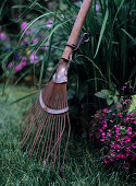 Slightly rusty, vintage rake in garden in front of purple-flowering ground cover plants