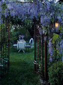 Luxuriantly flowering wisteria climbing over metal garden gate with view of romantically set garden table