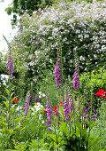 Fingerhut im wilden Sommergarten