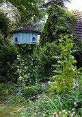 Vogelhaus im wilden Garten vor efeubewachsenem Haus