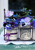 Violas in tin cans covered in decorative paper in antique bottle carrier