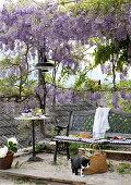 Gemütlicher Sitzbank und Tisch unter Blauregen-Laube