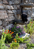 Summer flowers and cat next to stone wall