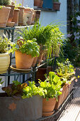Herbs and lettuces in terracotta pots on shelving against house facade