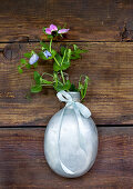 Flowering pea shoots ('Blauwschokker') in old water bottle hanging on wooden wall