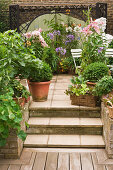 Tub plants, flowers, vegetables on a terace