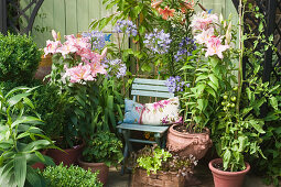 Lilies, agapanthus, tomato plants and lettuce in terracotta pots on terrace
