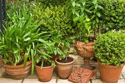 Plants in terracotta pots on terrace
