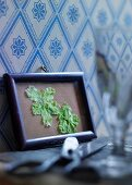 Pressed hellebores in picture frame