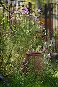 Terracotta pot hidden amongst wild flowers