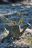 Yellow twigs and seed heads in metal watering can