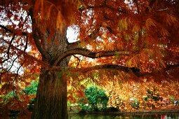 Autumn atmosphere in park