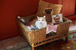 Cat in comfortable basket of cushions against red-painted wall