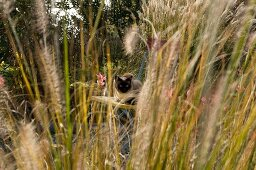 View of cat sitting on chair through tall grasses