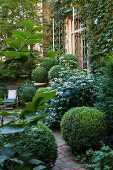 Buchsbaumkugeln im Beet und in Töpfen in einem Stadtgarten