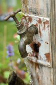 Old, brass garden tap mounted on weathered wooden board