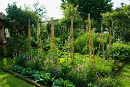 Üppiges Gemüsebeet und zusammengebundene Pflanzstäbe im Garten