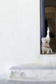 Dog sitting on front stoop