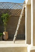 Rustic ladder leaning on wall and potted plants on Mediterranean roof terrace