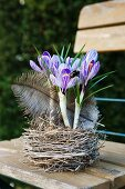 Crocuses in nest with feather