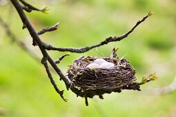 Easter nest on twig