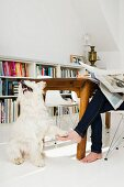Dog playing with woman in kitchen