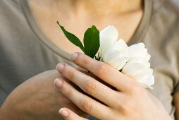 Woman holding white flowers, close-up of hands