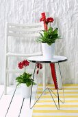 Potted gerbera daisies on metal side table