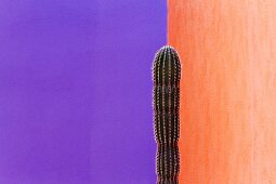 Cactus Against Contrasting Walls