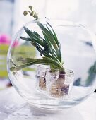 Flower bulb poking out of its glass terrarium
