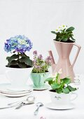 Flowering plants planted in old china coffee filters
