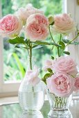 Pink roses in various glass vases