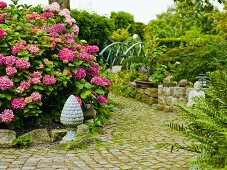 Oriental-style ornamental garden with cobbled path and pink hydrangea
