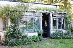 Enchanting idyll - conservatory extension with peeling window frames covered in climbing plants