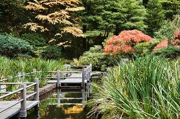 Wooden path along a Koi pond in a Japanese garden in Portland
