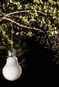Lamp in shape of light bulb lit from below hanging from leafy branch at night