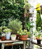 Potted plants on old wooden table next to wire grid shelving on terrace