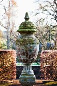 Antique, mossy urn flanked by clipped hedges