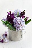 Hyacinths in zinc mug