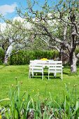 White-painted garden furniture below apple tree