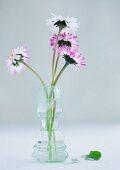 Gänseblümchen in Glasvase