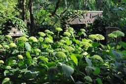 Sculptures hidden in opulent garden