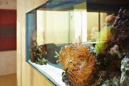 Large aquarium built into the wall