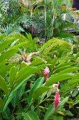 Blühender, tropischer Garten